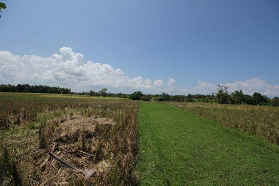 Freehold Plot in Tabanan