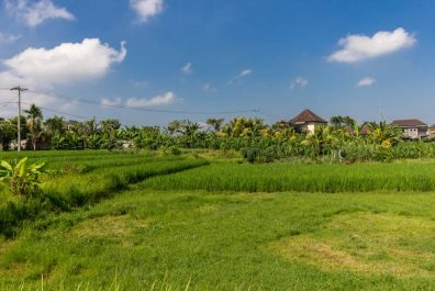 land with Rice Field View