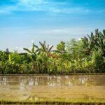 4 Essential Aspects When Investing Villa for Sale in Bali